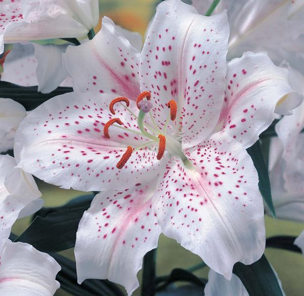 Салон «Парижанка» предлагает самые свежие цветы – заказ цветов можно оформить через сайт в удобное для вас время.